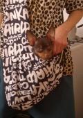 сумка-почтальон для собак
