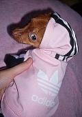 Адидас (костюм для собак)