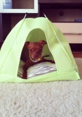 Палатка (домик) для животных