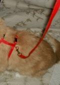 поводок для котика