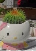 Горшок с кактусом