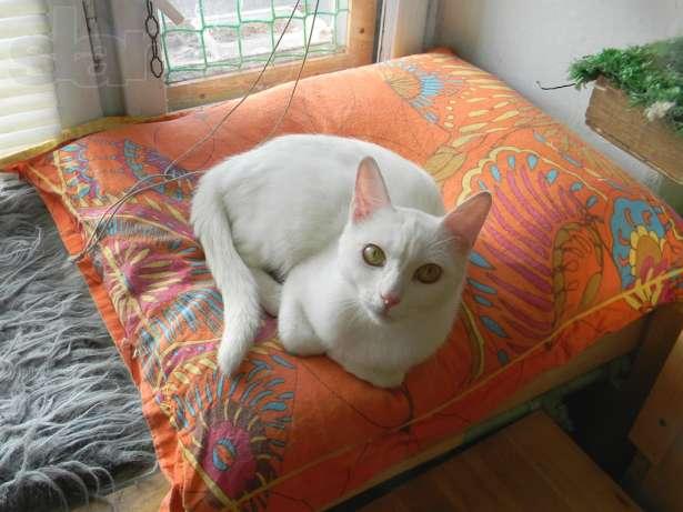 средство для молодые кошки в добрые руки спб магазин