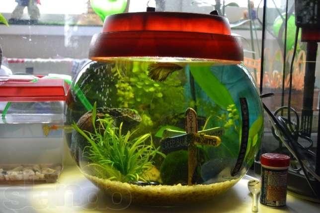 Донный фильтр в аквариуПолка с подсветкой своими