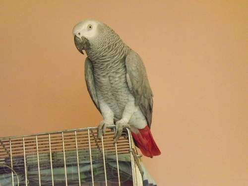попугай жако купить в ростове на дону далее